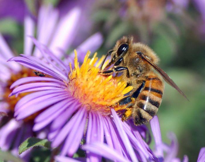 Sztuczne Owady Pomagaja Zapylac Kwiaty Ale Tez Szpiegowac
